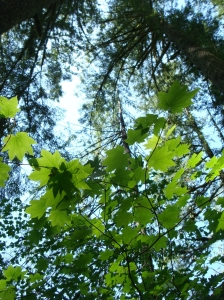 sun spotted leaves