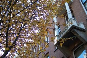 Autumn Colors 007