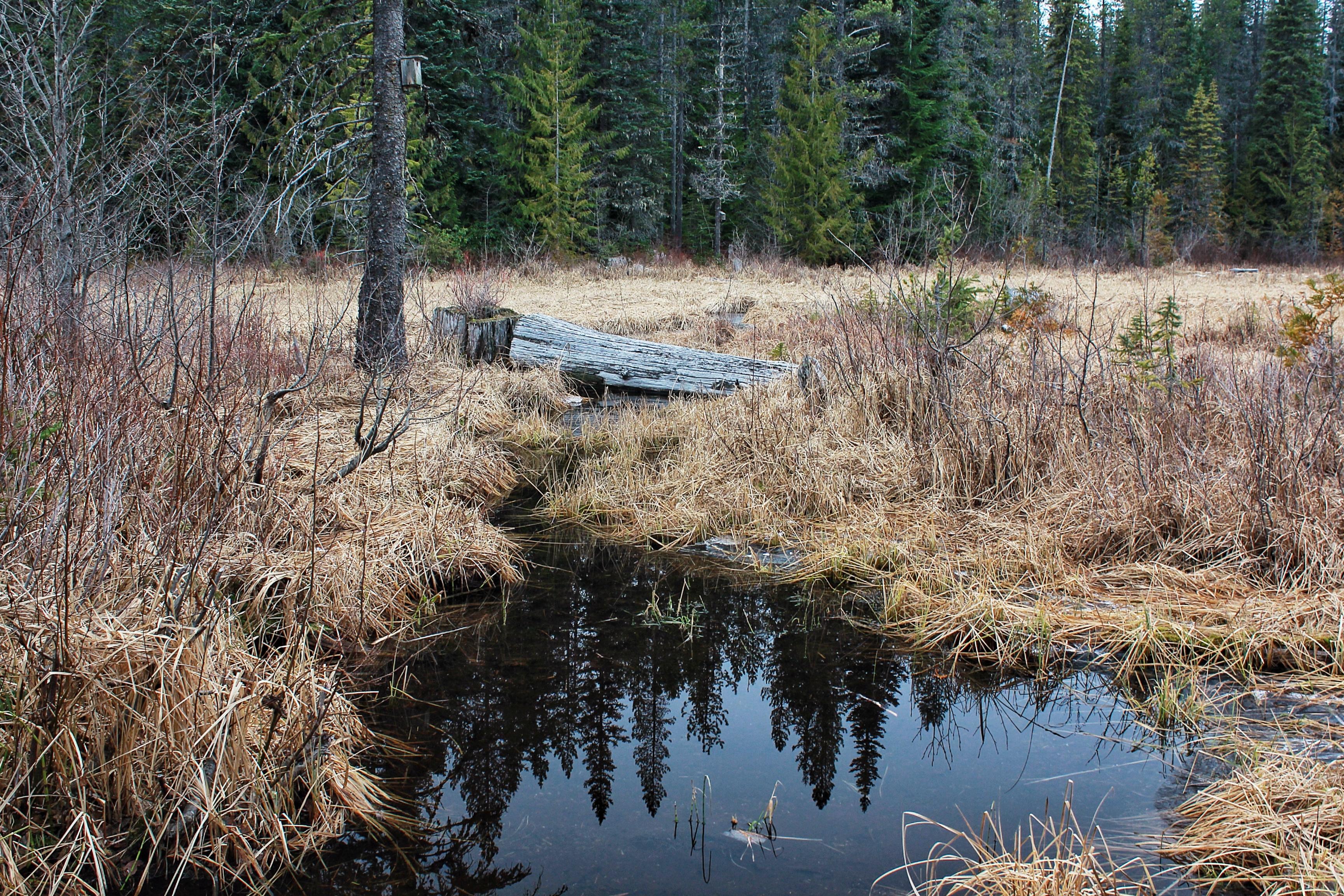 hiking Trillium lake